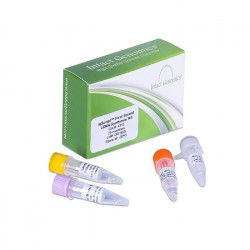 igScript™ First Strand cDNA Synthesis kit