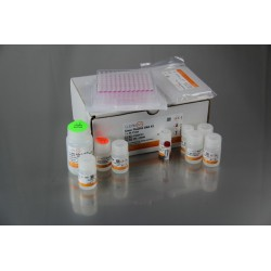 Clean Plasmid TR DNA Kit